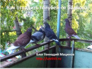 Как отвадить голубей